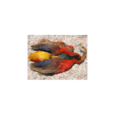 feather-craft FEATHER-CRAFT Golden Pheasant 1/2 Skins