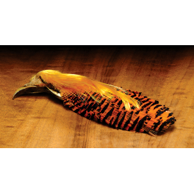 Complete Golden Pheasant Head