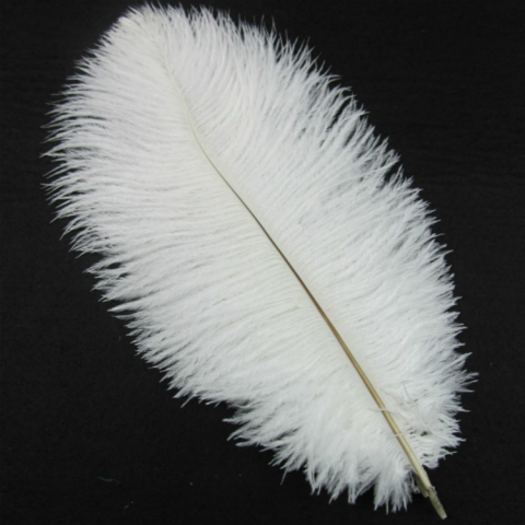 Large Ostrich Plumes
