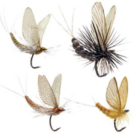 j:son J:SON Mayfly Adult Dun