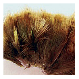 feather-craft Hen Pheasant Strung Marabou