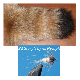 Canadian Lynx Tail
