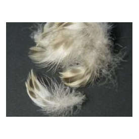 feather-craft Hen Mallard Belly Feathers