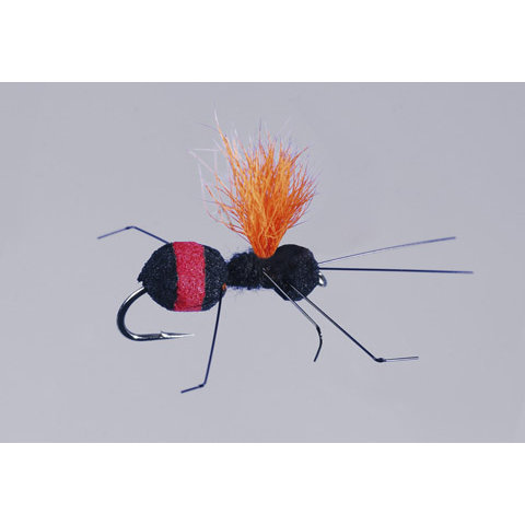50% OFF! Carpenter Ant