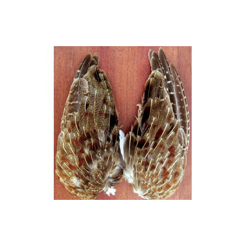 feather-craft Wild Hungarian Partridge Wing Pairs