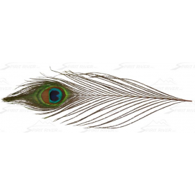 UV2 Peacock Eyes