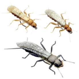 j:son J:SON Adult Stonefly